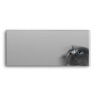 Grey Persian Cat with Blue Eyes on Grey Envelope