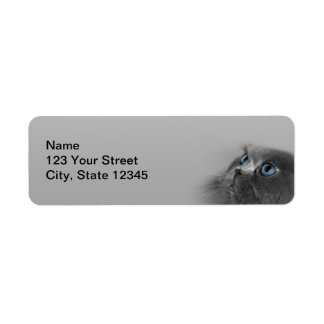 Grey Persian Cat with Blue Eyes on Grey Label