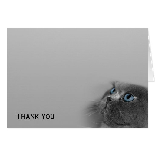 Grey Persian Cat with Blue Eyes on Grey Stationery Note Card