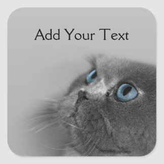 Grey Persian Cat with Blue Eyes on Grey Square Stickers