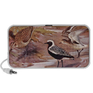 Grey Plovers and a Whimbrel iPhone Speakers