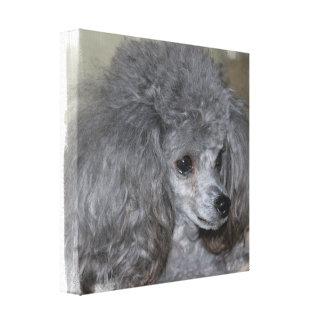Grey Poodle Canvas Print