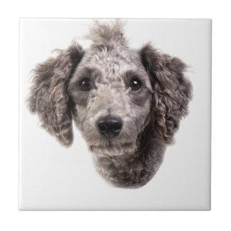 grey punk poodle ceramic tile