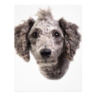 grey punk poodle letterhead