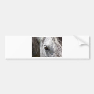 Grey Quarter Horse Stallion Car Bumper Sticker