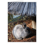 Grey Rabbit Greeting Cards