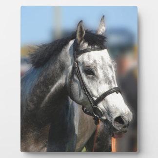 Grey Race Horse Racing Portrait , sports photo Plaque