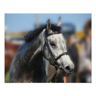 Grey race horse sports portrait poster