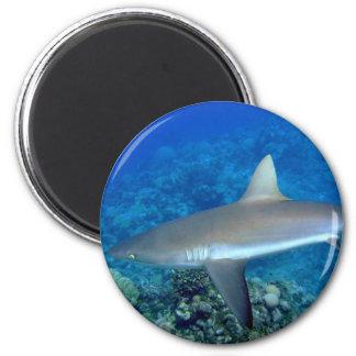 Grey Reef Shark 2 Inch Round Magnet