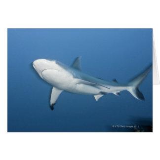 Grey reef shark (Carcharhinus amblyrhynchos) Card