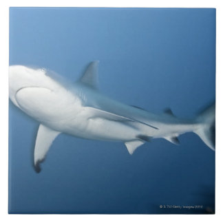 Grey reef shark (Carcharhinus amblyrhynchos) Ceramic Tile