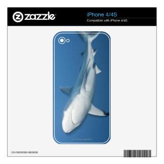 Grey reef shark (Carcharhinus amblyrhynchos) Decals For The iPhone 4S