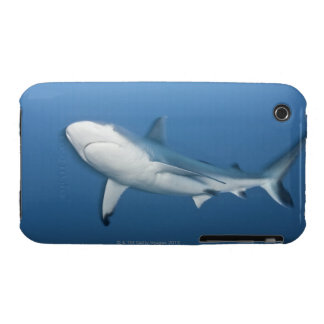 Grey reef shark (Carcharhinus amblyrhynchos) iPhone 3 Case-Mate Cases