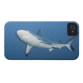 Grey reef shark (Carcharhinus amblyrhynchos) iPhone 4 Cover