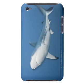 Grey reef shark (Carcharhinus amblyrhynchos) iPod Case-Mate Cases