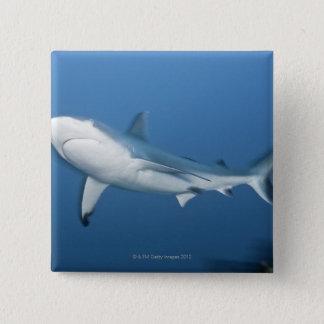 Grey reef shark (Carcharhinus amblyrhynchos) Pinback Button