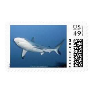 Grey reef shark (Carcharhinus amblyrhynchos) Postage Stamp