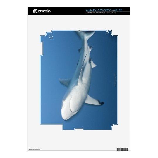 Grey reef shark (Carcharhinus amblyrhynchos) Skins For iPad 3