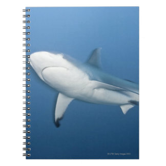 Grey reef shark (Carcharhinus amblyrhynchos) Spiral Notebook
