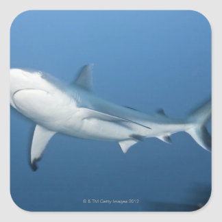 Grey reef shark (Carcharhinus amblyrhynchos) Square Sticker