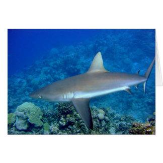 Grey Reef Shark Card