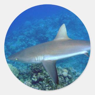 Grey Reef Shark Classic Round Sticker