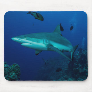 Grey Reef Shark Great Barrier Reef Coral Sea Mouse Pad
