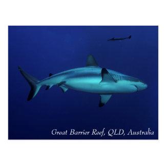 Grey Reef Shark Great Barrier Reef Coral Sea Postcard