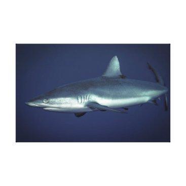 Art Themed Grey Reef Shark in Yap Micronesia Canvas Print
