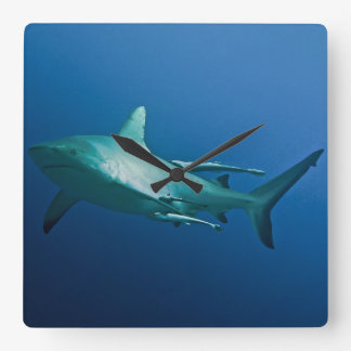 Grey Reef Shark on the Great Barrier Reef Square Wall Clock