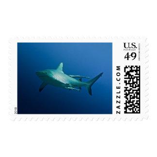 Grey Reef Shark Postage Stamps