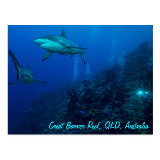Grey Reef Shark Postcard