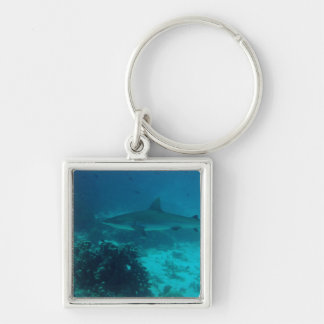 Grey Reef Shark Swimming Keychain