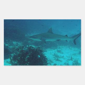 Grey Reef Shark Swimming Rectangular Sticker