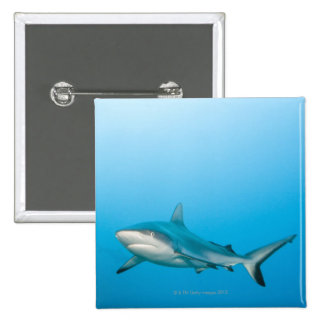 Grey reef sharks (Carcharhinus amblyrhnchos) Button
