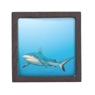 Grey reef sharks (Carcharhinus amblyrhnchos) Keepsake Box