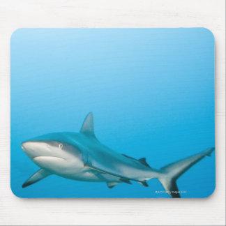 Grey reef sharks (Carcharhinus amblyrhnchos) Mousepad