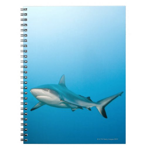 Grey reef sharks (Carcharhinus amblyrhnchos) Notebook