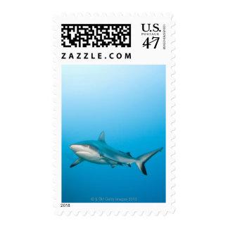 Grey reef sharks (Carcharhinus amblyrhnchos) Postage