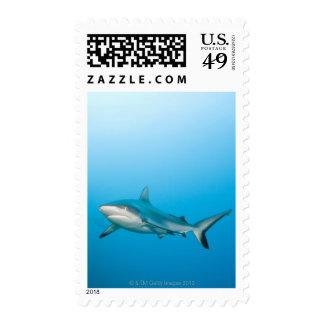 Grey reef sharks (Carcharhinus amblyrhnchos) Stamps