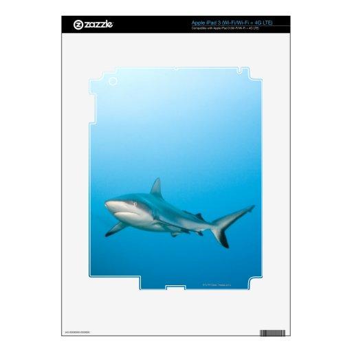 Grey reef sharks (Carcharhinus amblyrhnchos) iPad 3 Decals