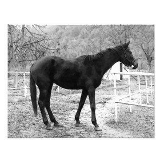 Grey Scale Pop Art Horse Custom Invite