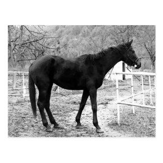 Grey Scale Pop Art Horse Postcard