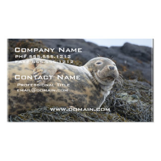 Grey Seal Business Card Template