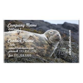 Grey Seal Business Card Templates