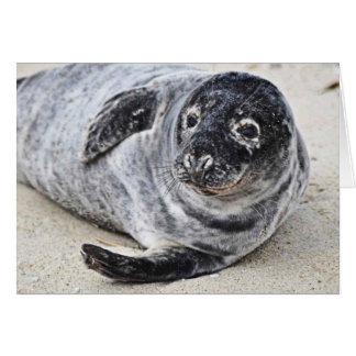 Grey Seal Card