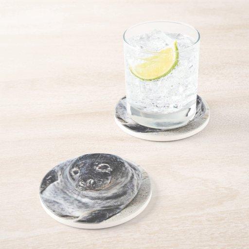 Grey Seal Drink Coaster