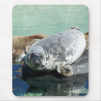 Grey Seal Looking Up Mouse Pad