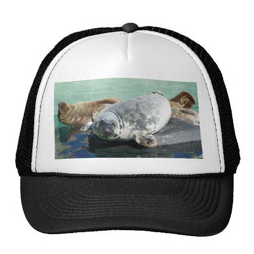 Grey Seal Looking Up Trucker Hat