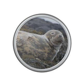 Grey Seal Speaker